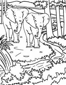 Gambar Mewarnai Pemandangan Hutan Gajah