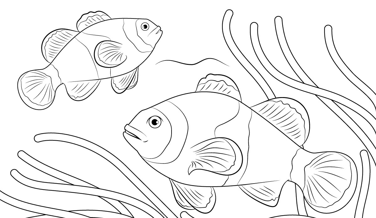Download 95 Gambar Ikan Untuk Anak Sd Terbaru Gratis
