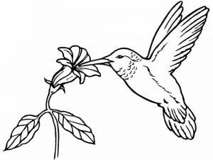 Burung Bunga