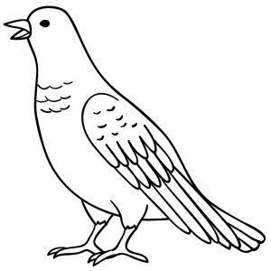Gambar Mewarnai Burung Anak Tk Paud Dan Sd Marimewarnai Com