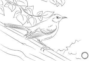 Burung Kecil lucu