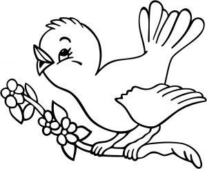 Burung Lucu