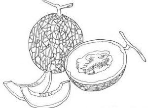 Gambar Mewarnai Buah Melon 2