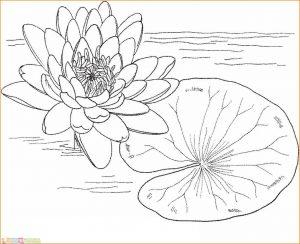 Gambar Mewarnai Bunga 09 Marimewarnai