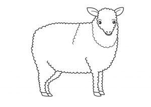 Gambar Mewarnai Domba