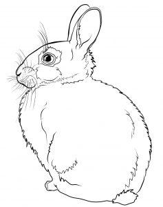Gambar Warnai Kelinci