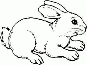 Gambar mewarna kelinci