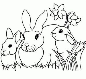 Mewarna kelinci