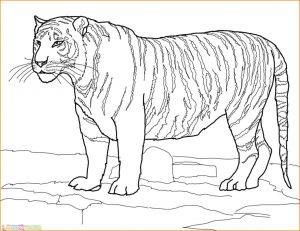 Mewarnai Gambar Harimau 02 Marimewarnai