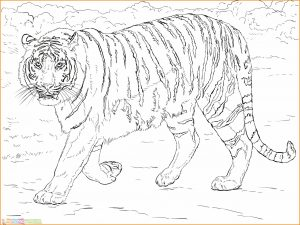 Mewarnai Gambar Harimau 07 Marimewarnai