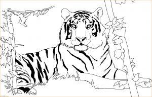 Mewarnai Gambar Harimau 08 Marimewarnai