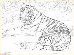 Mewarnai Gambar Harimau 09 Marimewarnai