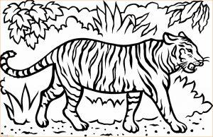 Mewarnai Gambar Harimau 10 Marimewarnai