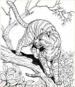 Mewarnai Gambar Harimau 16 Marimewarnai