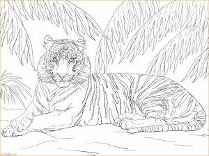 Mewarnai Gambar Harimau 20 Marimewarnai
