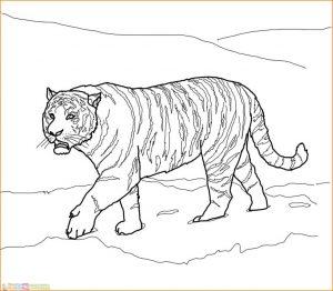 Mewarnai Gambar Harimau 22 Marimewarnai