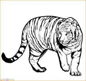 Mewarnai Gambar Harimau 23 Marimewarnai
