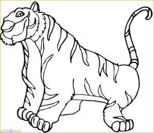 Mewarnai Gambar Harimau 25 Marimewarnai