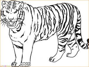 Mewarnai Gambar Harimau 26 Marimewarnai