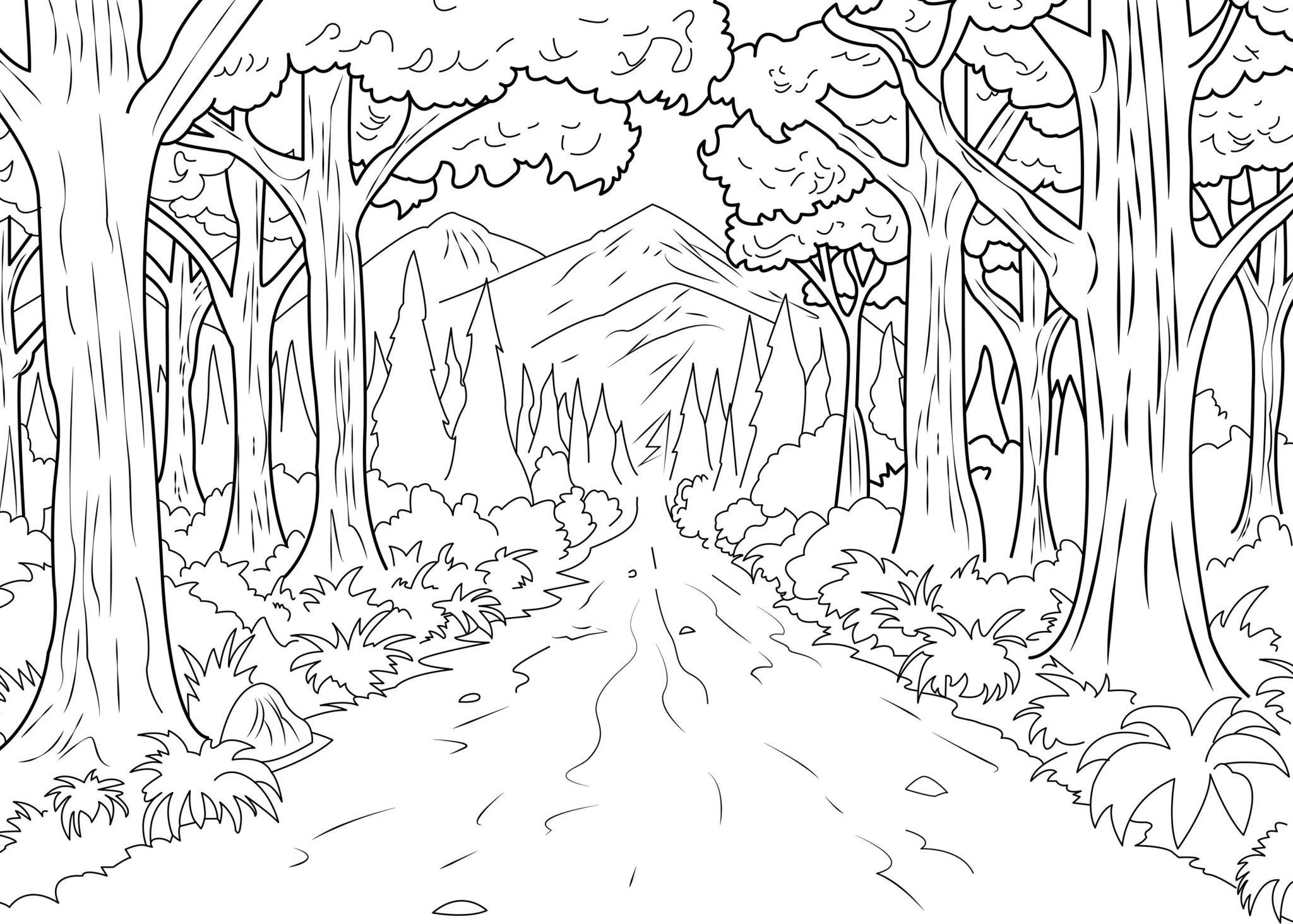 Gambar Mewarnai Pemandangan Hutan Anak Tk Paud Dan Sd