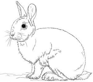 Mewarnai Gambar Kelinci