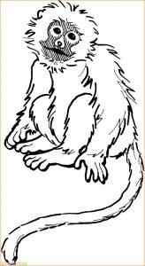 Mewarnai Gambar Monyet 10