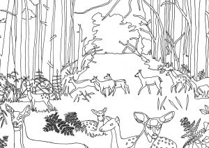 Mewarnai Gambar Pemandangan Hutan