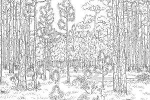 Mewarnai Gambar Pemandangan Hutan Anak TK