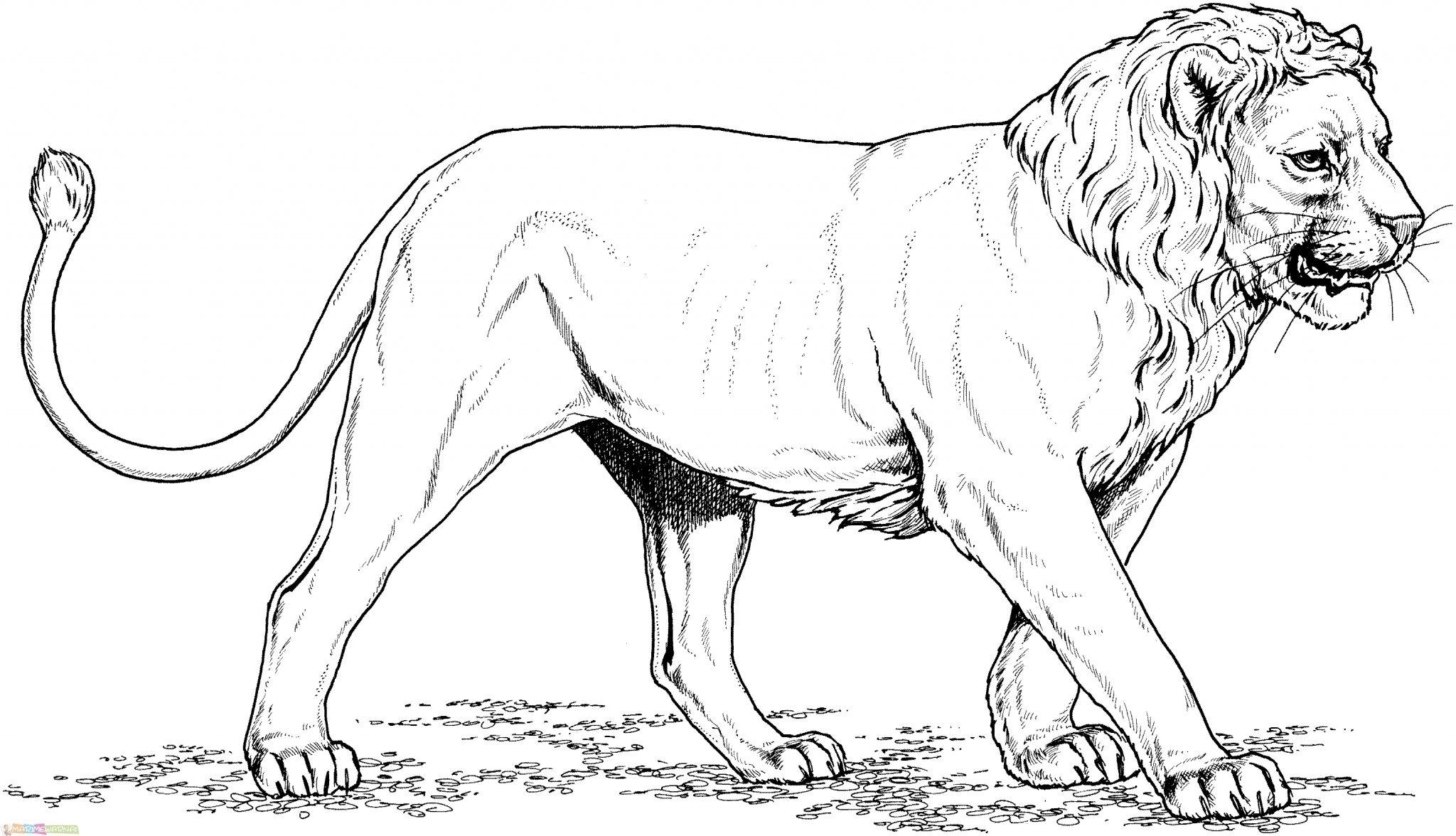 √30 Mewarnai Gambar Singa Untuk TK Paud SD
