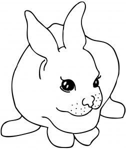 Mewarnai Kelinci lucu