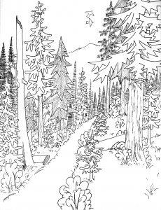 Mewarnai Pemandangan Hutan