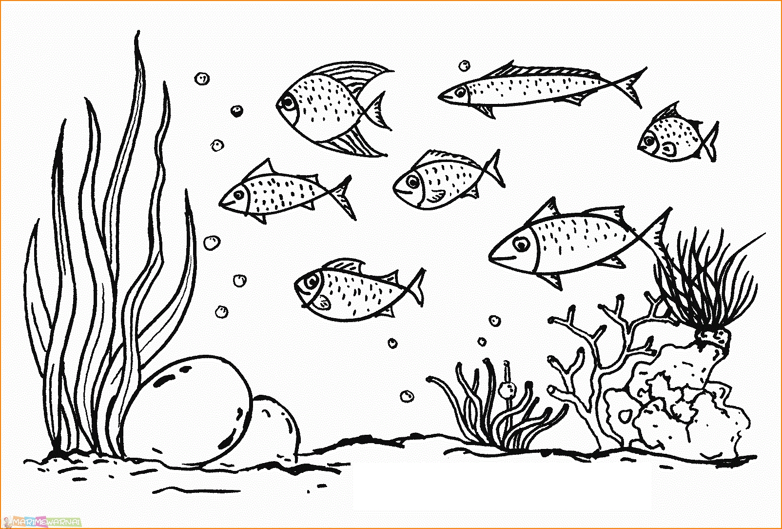 60 Paling Keren Gambar Mewarnai Macam Macam Ikan