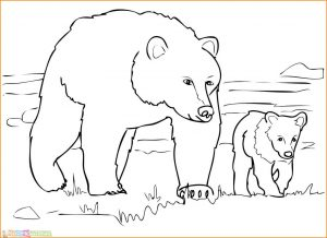 Sketsa Hewan Berkaki Empat Beruang