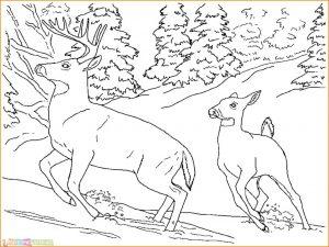 Sketsa Hewan Berkaki Empat Kijang