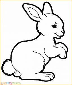 35+ Gambar hewan animasi kelinci berwarna terbaru