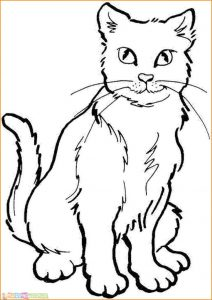 Sketsa Hewan Kucing Jantan