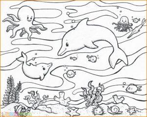 Sketsa Hewan Laut Lumba Lumba