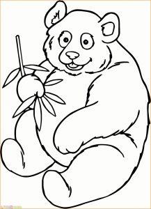 Sketsa Hewan Panda