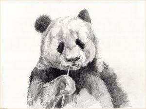 Sketsa Hewan Panda Seni