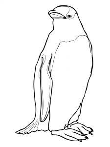 cara gambar pinguin