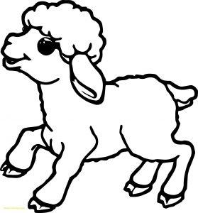 gambar domba kartun