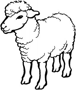 gambar domba kartun lucu