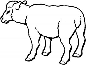 gambar mewarnai domba anak tk