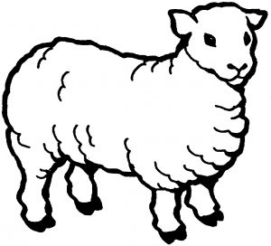 gambar mewarnai domba putih