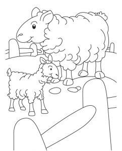 mewarnai gambar domba