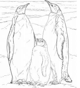 sketsa gambar pinguin