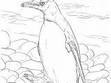 gambar mewarnai pinguin 2